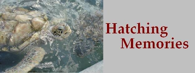 Hatching Memories