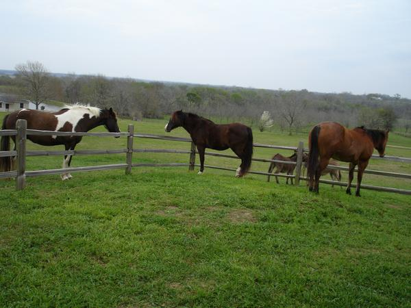Errbody On The Ranch :]