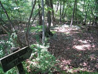 Hemlock Trail bog