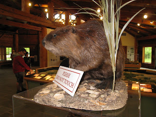 Beaver at the Frank R. Lautenberg Visitor Center