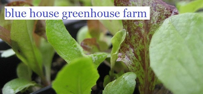 Blue House Greenhouse Farm