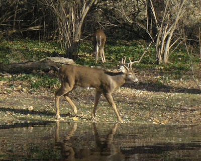 narrative essays about deer hunting