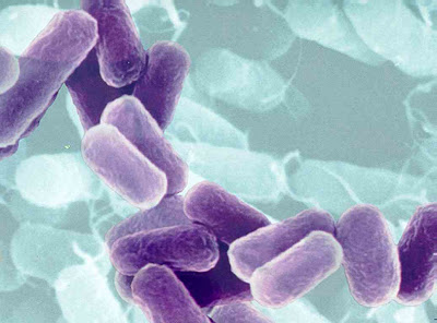 Women lead men in bacteria hands down