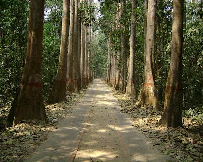 lawachara, rain,forest,sreemangal