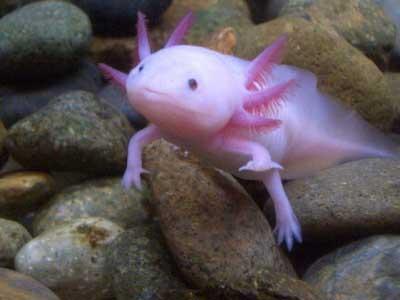 naruto: ikan aneh tapi lucu