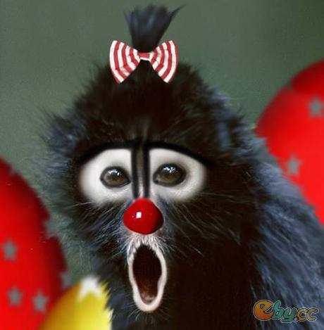 Imagenes chistosas de animales