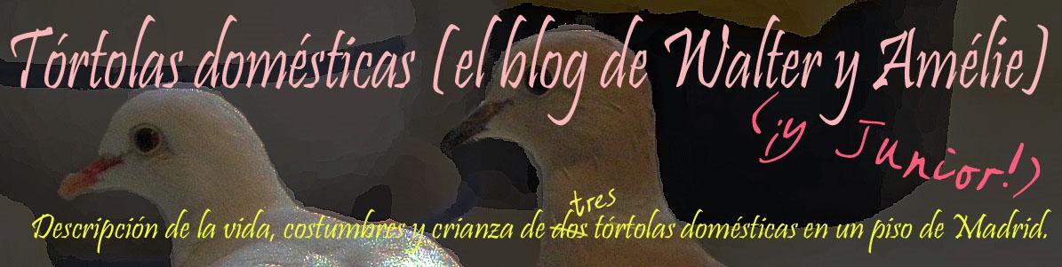 Tórtolas domésticas (el blog de Walter y Amélie) - ¡Y Junior!