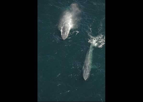 [baleia+2.jpg]