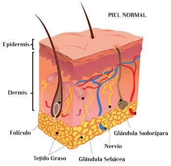 Las enfermedades de la piel atopichesky la dermatitis