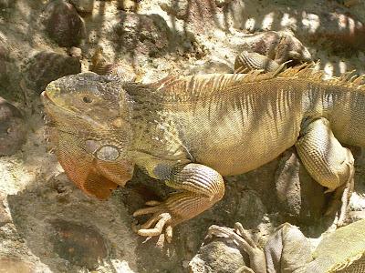 Bannerghatta Reptile