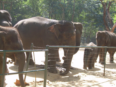 Bannerghatta Elephants
