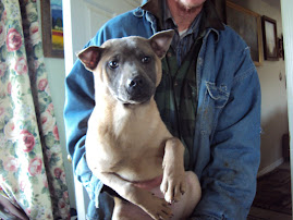 Blue Faced Issabella Fawn Thai Ridgeback Female