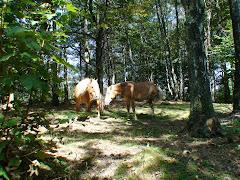 Free horses