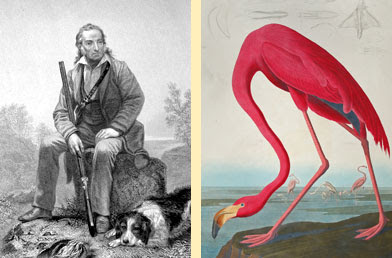 ���� ������� ���� ������ ���� John-James-Audubon's-Birds-of-America-1.jpg
