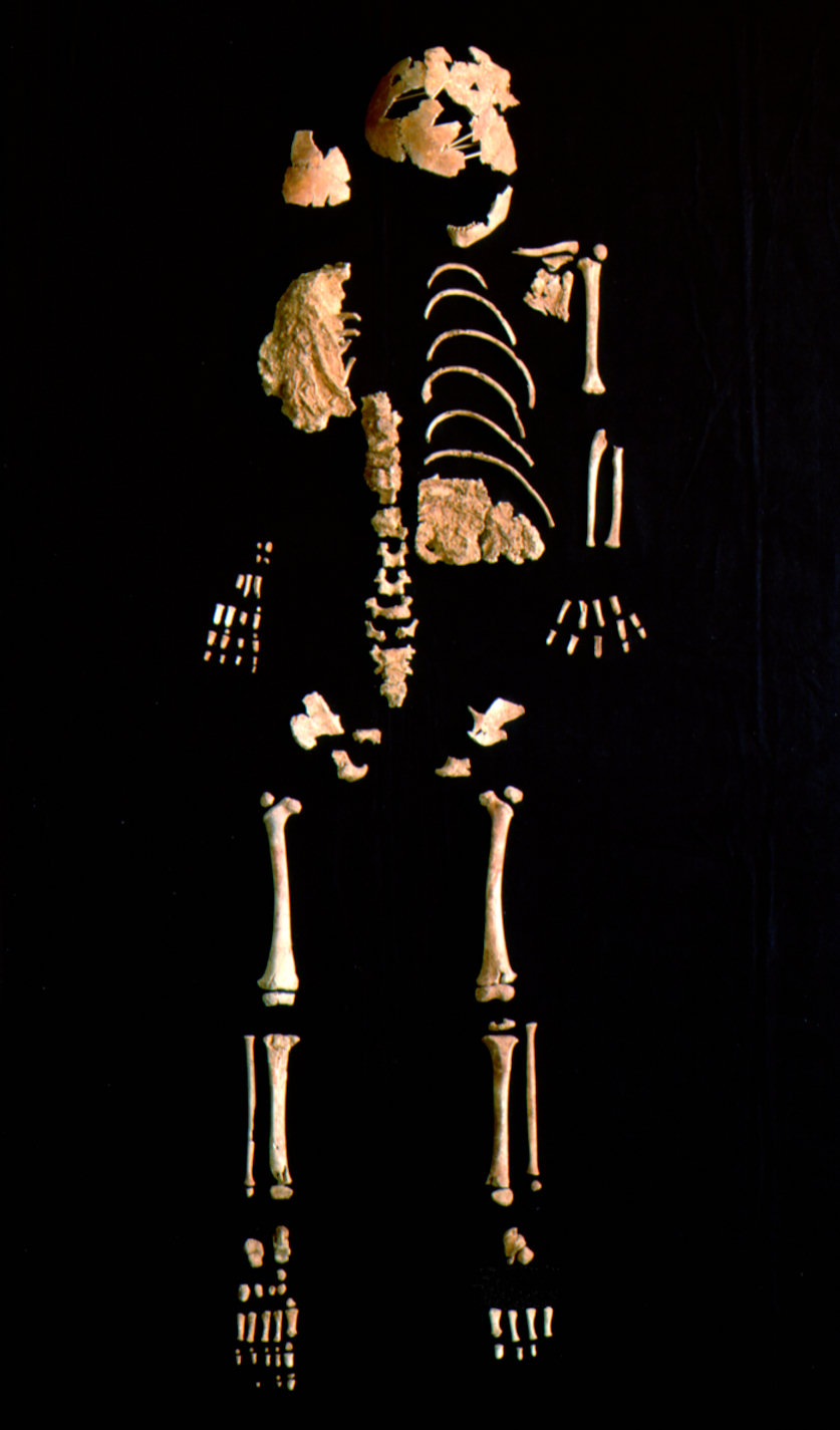 [The+skeleton+of+the+30000+year+old+Neandertal_modern+]