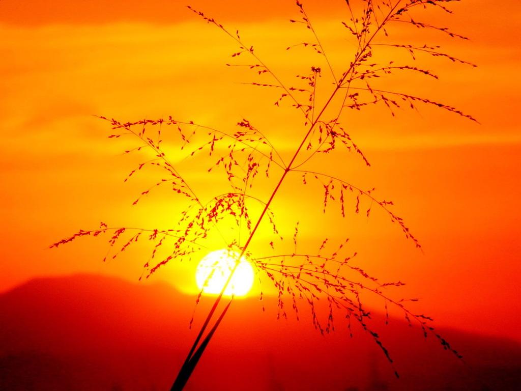 http://3.bp.blogspot.com/_jQndjfhnHaI/TMMpSTpgY_I/AAAAAAAAALg/1hVLzuwjnOk/s1600/sunshine.jpg