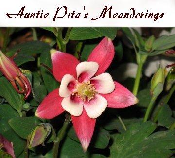 auntie pita's meanderings