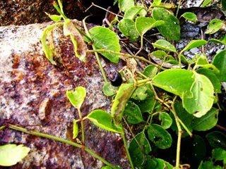 Gambar hiasan dari blog lain :pokok lakom