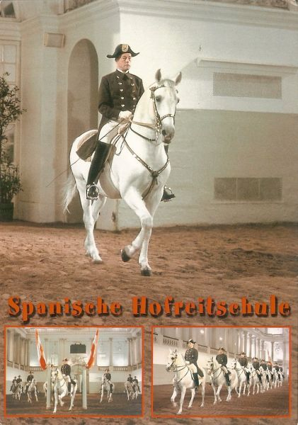 rider of the spanish riding school on white lipizzaner horse