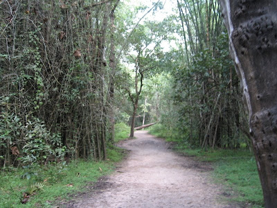 Inside Kuruva Island, Wayanad