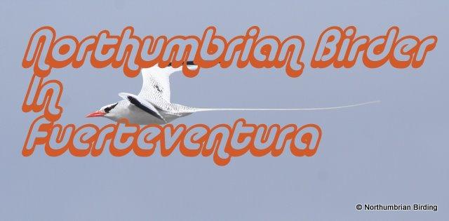 Northumbrian Birder In Fuerteventura