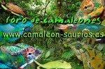 Foro de Camaleones, Geckos, Pogonas, Tarántulas, Ofidios..