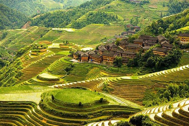 Terasasta polja  Terasasta-polja-pirinca-4