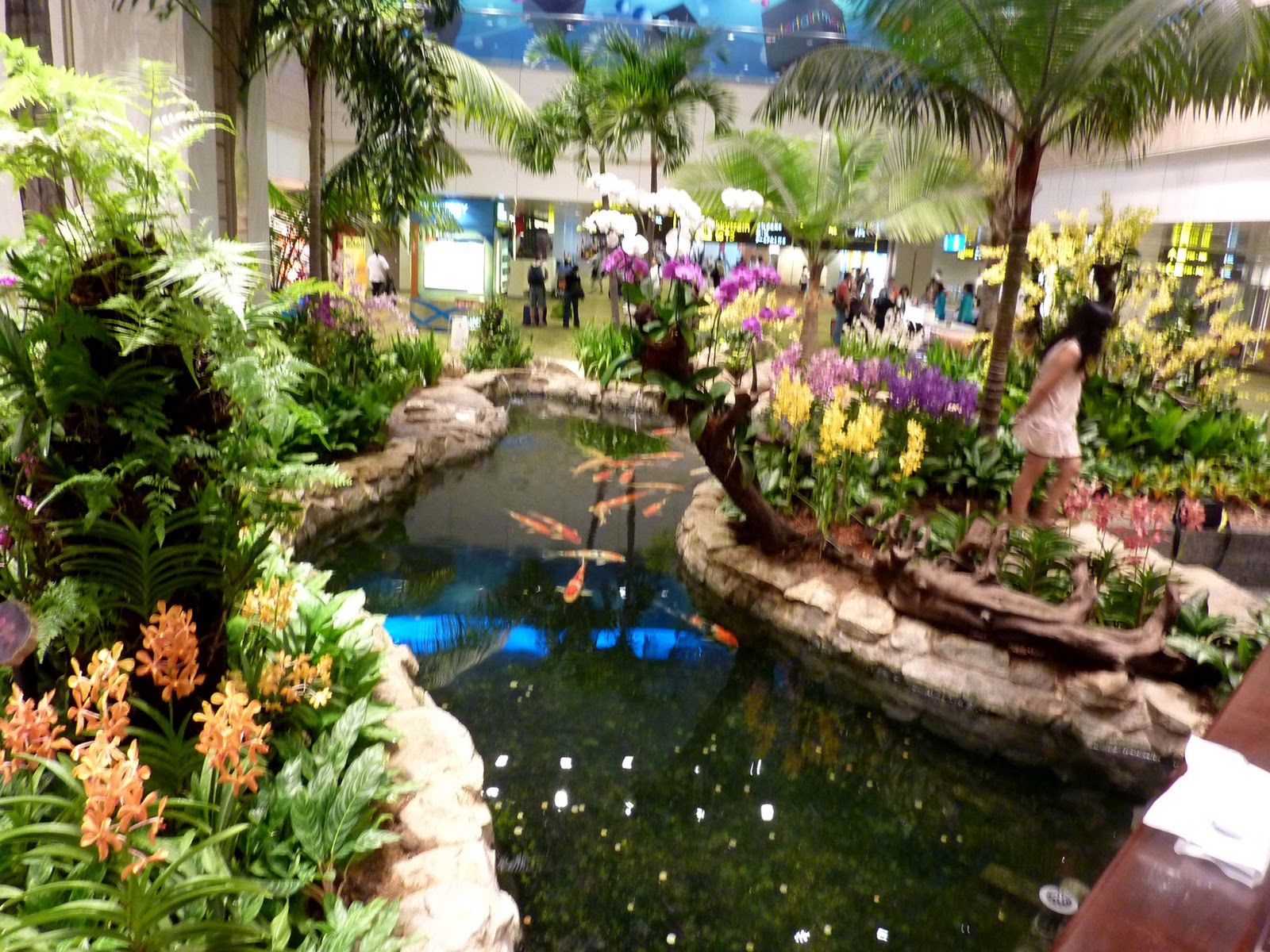 Favorite airports for The koy pond
