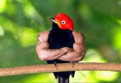 Vogel met spierballen