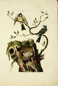 Cornelius Nozeman Prints