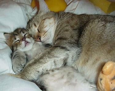 Cat Hugging Baby Video