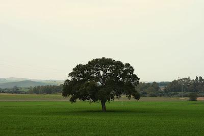 Llanos de 'La Guareña'