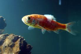 Karachi aquarium trading list of aquarium diseases for Tropical fish diseases