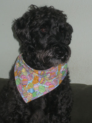 schnoodle haircuts - group picture, image by tag - keywordpictures.com