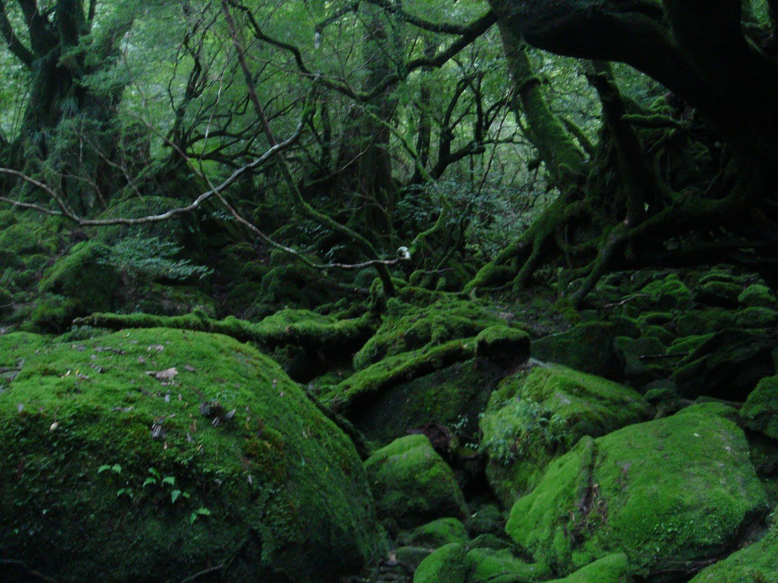 屋久島の画像 p1_25