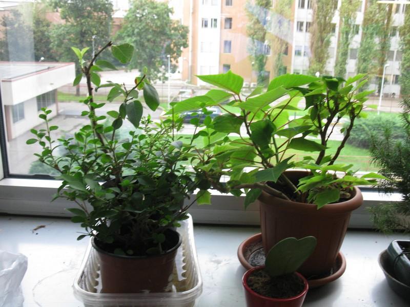 Ildorico 18 agosto 2010 piante da ufficio - Piante da ufficio resistenti ...