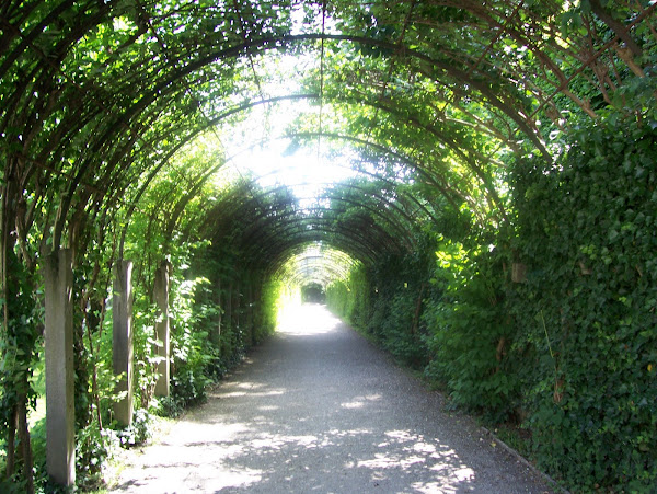 The Ivy Tunnel at Mirabel Gardens in Salzburg Austria