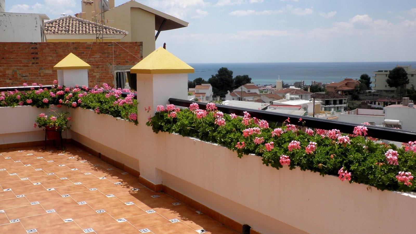 Jardinbio pelargoniun gitanillas - Plantas para arriates ...