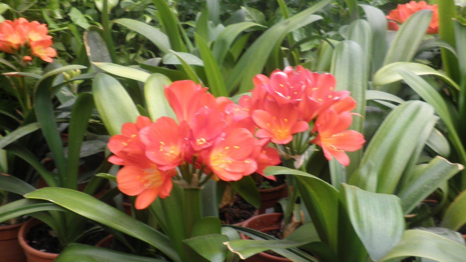 Jardinbio plantas y especies para jardines en m laga - Plantas de sombra exterior ...
