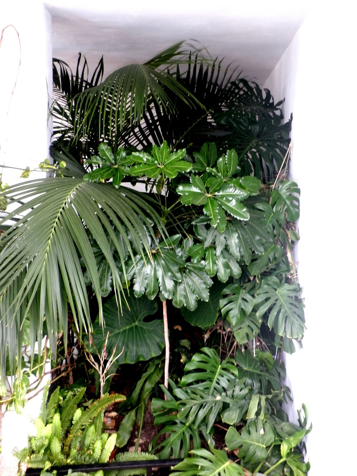 Jardinbio plantas de sombra interior - Plantas de sombra exterior ...