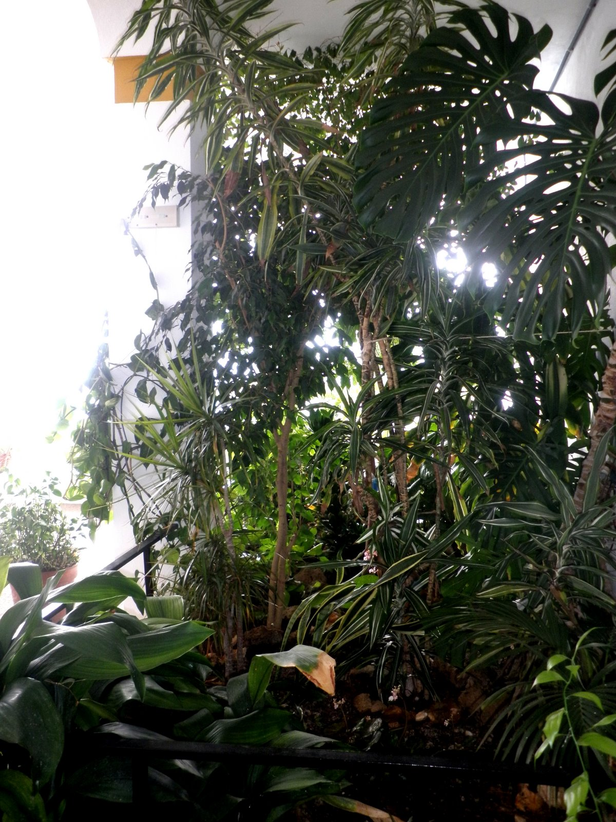Jardinbio Plantas De Sombra Interior: plantas tropicales interior