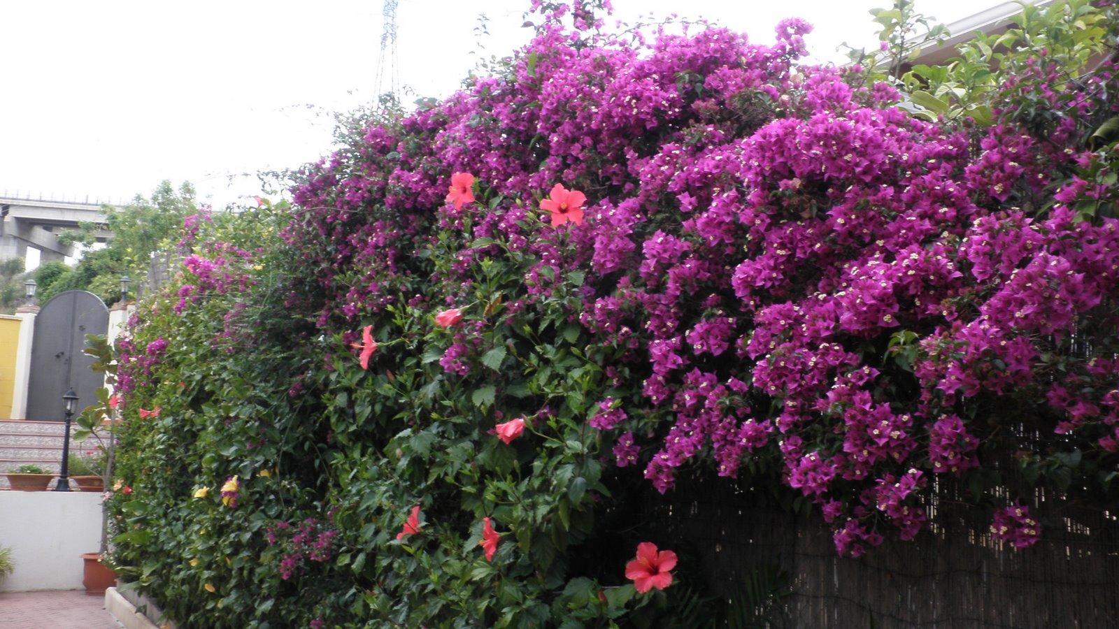 Jardinbio 06 18 10 - Setos de jardin ...