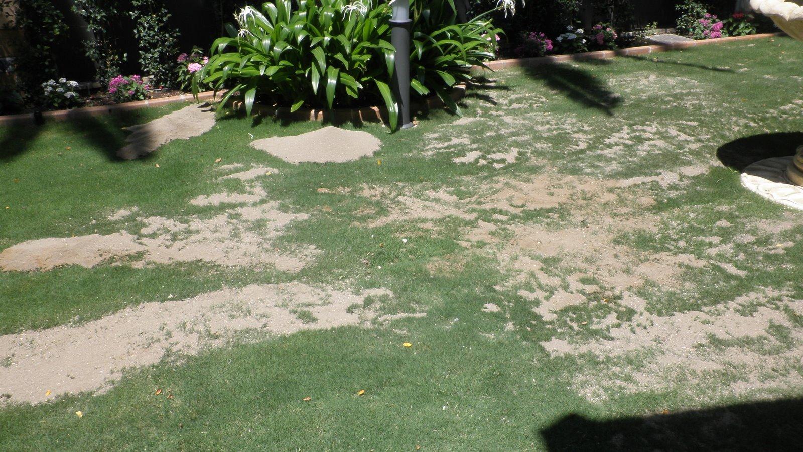 Jardinbio c sped de tepes recebo y semillas - Semillas de cesped para jardin ...