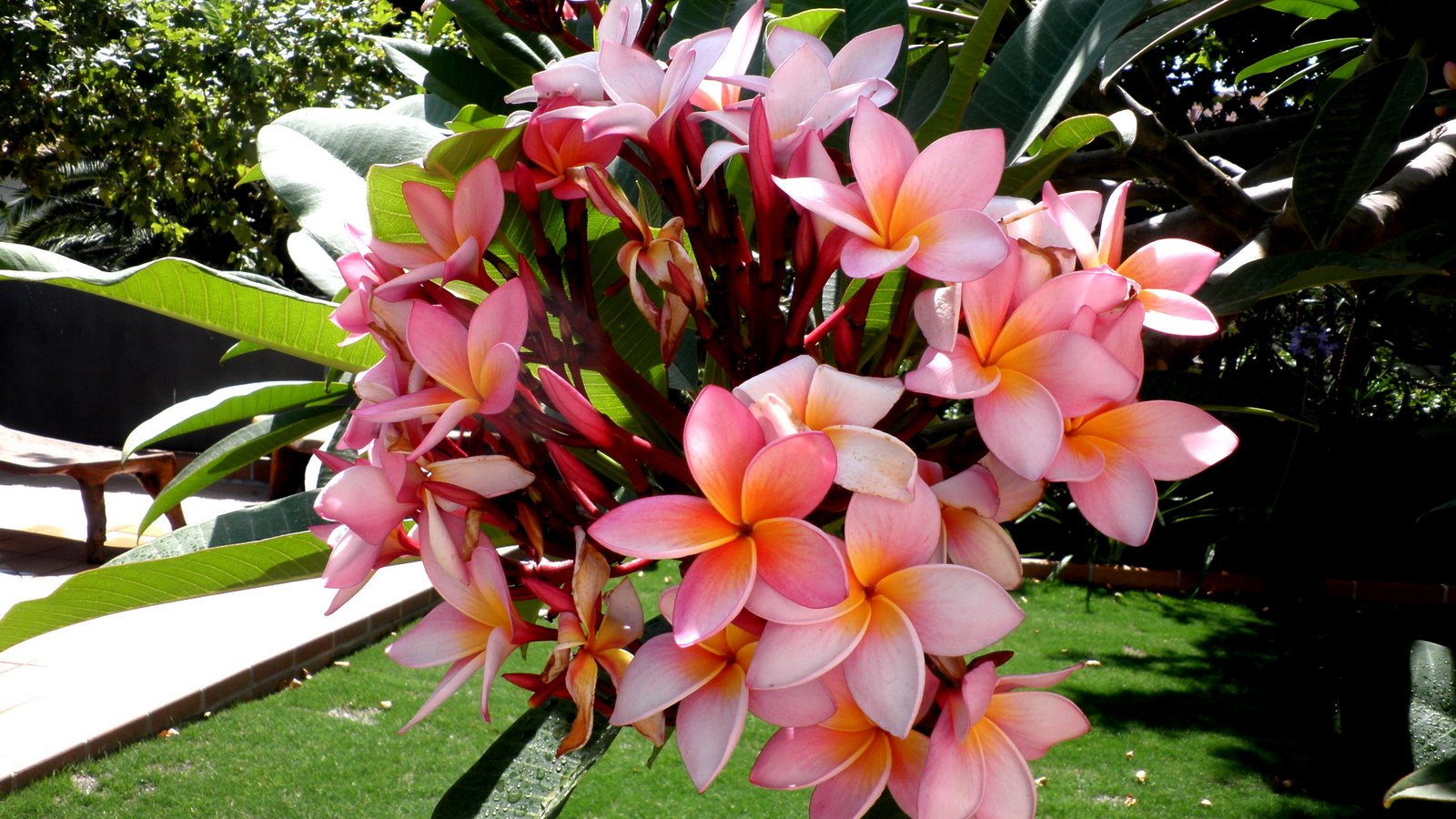 Jardinbio plantas y especies para jardines en m laga for Arboles crecimiento rapido hoja perenne