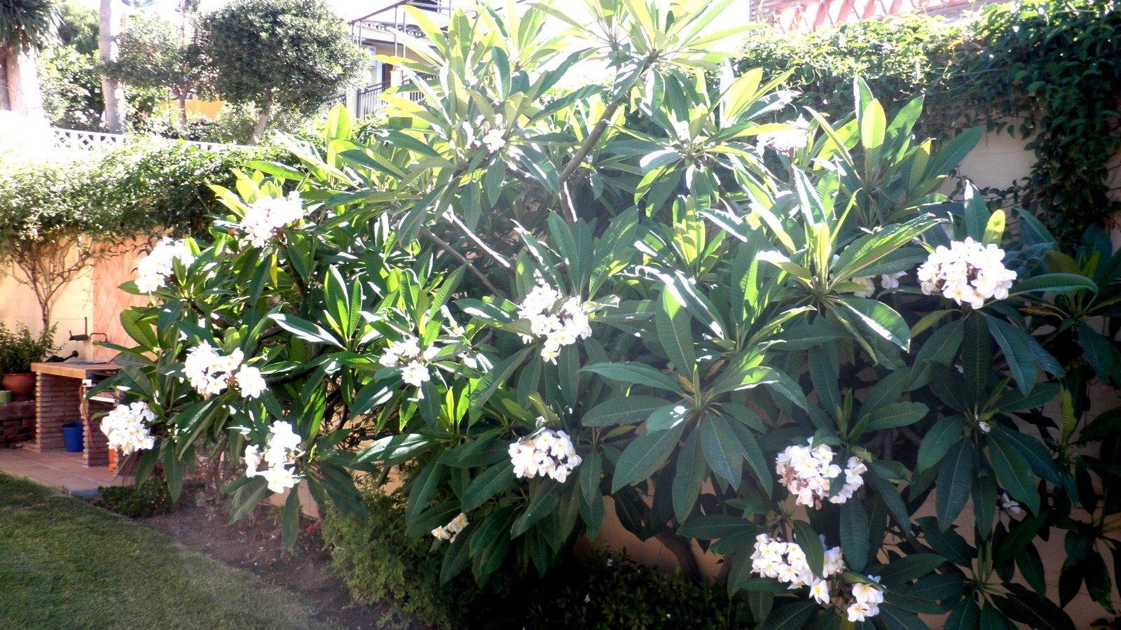 Jardinbio plantas y especies para jardines en m laga for Arbustos de jardin nombres