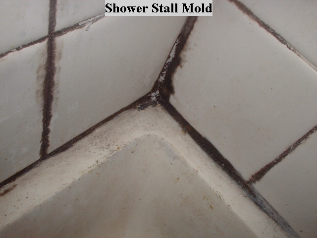 Tip Of The Day Shower Mold Ask My Contractor