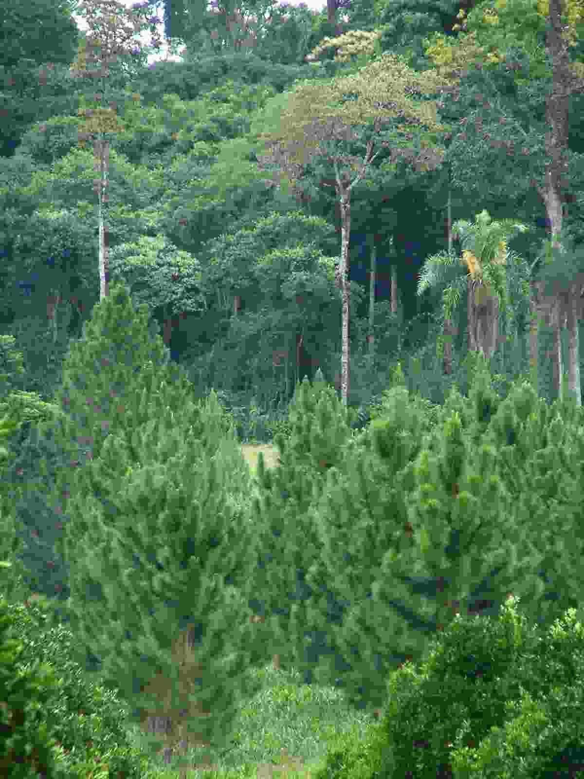 Saya recursos forestales for Partes de un vivero forestal