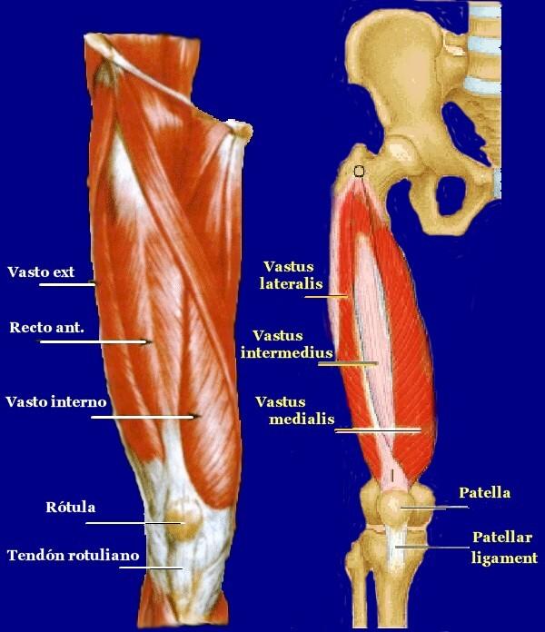El blog de francisco gilo fortalecimiento del cuadriceps for Vaso interno