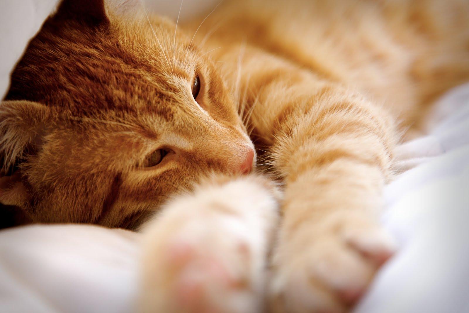 [orangecat.jpg]