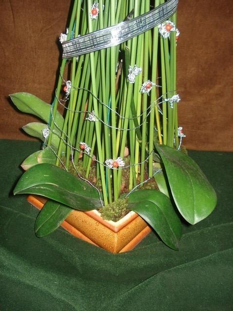 Detalhe mostrando as mudas de orquideas.